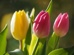 flowers-1258813_960_720